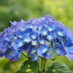 愛知県の愛地球博記念公園を満喫するための3つのオススメポイント