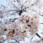 愛媛県の道後公園をオススメしたくなる3つの注目すべきポイント