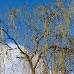 岩手県の中津川を堪能するための注目すべき3つのオススメポイント