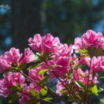 宮崎県の阿波木原森林公園をオススメする3つのポイント