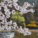 宮崎県の観音池公園を楽しく巡るためのオススメポイント3つ