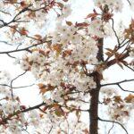大阪府の大仙公園を楽しみ尽くすオススメすべき3つのポイント