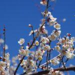 大阪府の龍泉寺を満喫するオススメすべき注目ポイント3つ