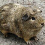 福岡県の福岡市動植物園を楽しく巡るオススメポイント3つ