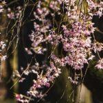 静岡県の浜松城公園を楽しむ注目すべきオススメポイント3つ