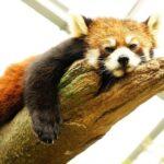 石川県のいしかわ動物園をオススメする3つの注目ポイント