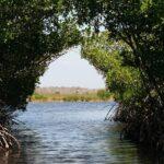 鹿児島県・黒潮の森マングローブパークのオススメポイント3つ
