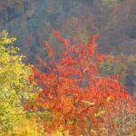 和歌山県の秋葉山公園を楽しく巡る3つのオススメポイント