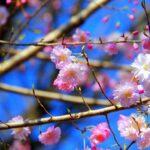 福井県のきのこの森を満喫するオススメしておきたいポイント3つ