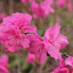 栃木県の霧降高原キスゲ平園地を楽しく巡るオススメポイント3つ