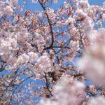 栃木県・とちのきファミリーランドを楽しむオススメポイント3つ
